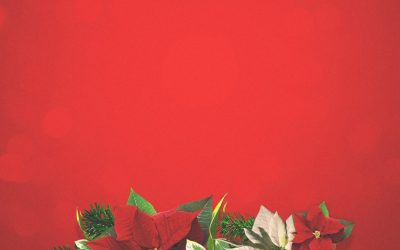 Order Christmas flowers now