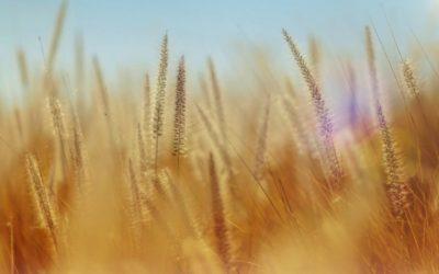 New Sunday School class looks at biblical stewardship